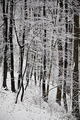Winter Art Print by Gabriela Insuratelu