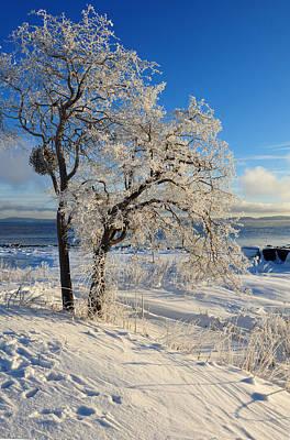Photograph - Winter Glory by Randi Grace Nilsberg
