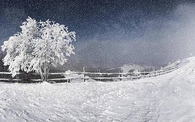 Pattern Digital Art - Winter by Maye Loeser