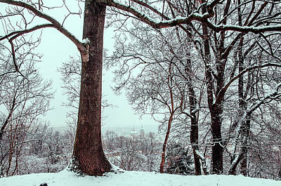 Photograph - Winter Petrin Park. Snowy Walk In Prague by Jenny Rainbow