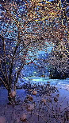 Photograph - Winter by Phil Koch