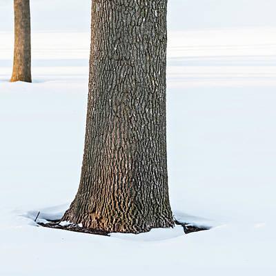 Photograph - Winter Scene - Abstract by Shankar Adiseshan