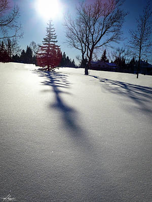 Photograph - Winter Shadows by Philip Rispin