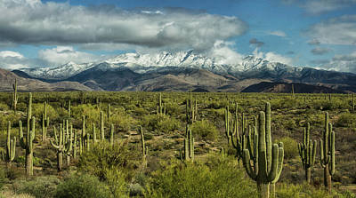Photograph - Winter Sonoran Style  by Saija Lehtonen