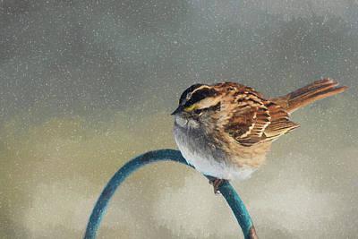 Photograph - Winter Sparrow by Cathy Kovarik