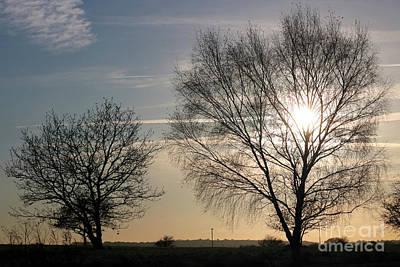 Photograph - Winter Sunset Through Trees On Epsom Downs Surrey Uk by Julia Gavin