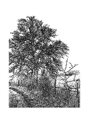 Belinda Landtroop Royalty-Free and Rights-Managed Images - Winter Tree 6 by Belinda Landtroop