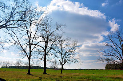 Photograph - Winter Trees by Jan Amiss Photography