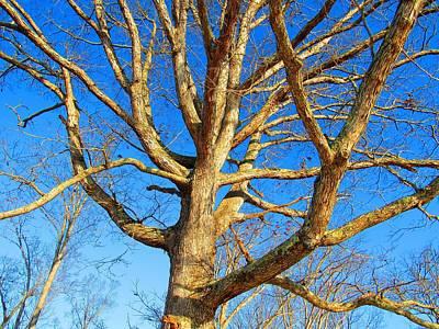 Photograph - Winter White Oak by Joshua Bales