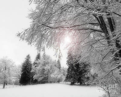 Photograph - Winter Wonderland by Edmund Nagele