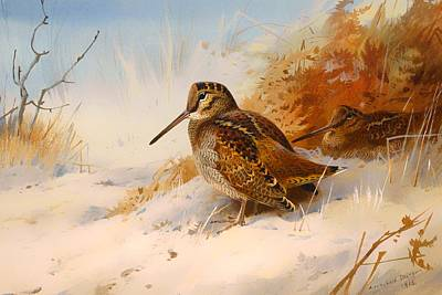 Woodcock Painting - Winter Woodcock by Mountain Dreams