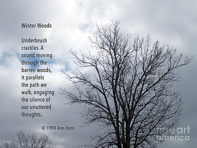 Photograph - Winter Woods by Ann Horn