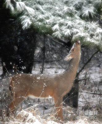 Photograph - Winter's Deer by Elizabeth Winter