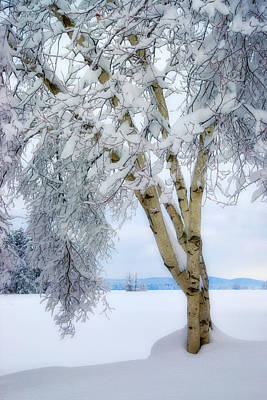 Photograph - Winter's Dream by Darylann Leonard Photography