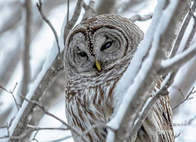Photograph - Wisdom Perches  by Cheryl Baxter