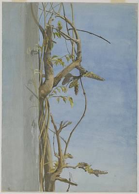 Wisteria On A Wall Art Print by Fidelia Bridges