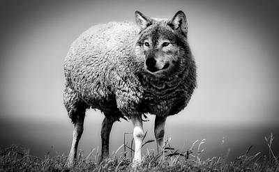 Photograph - Wolf In Sheep's Clothing by Sarah Richter