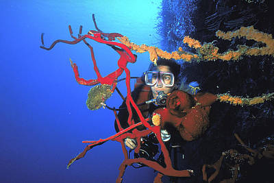Photograph - Woman Diver On Wall At Little Cayman by Carl Purcell