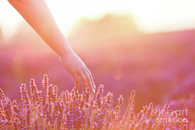 Photograph - Woman's Hand Softly Touching Lavender Flowers At Sunset. by Michal Bednarek
