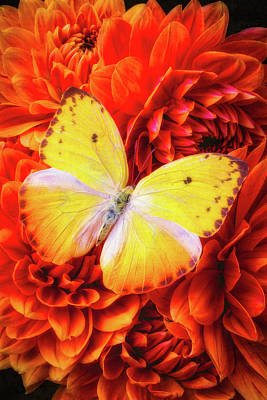 Photograph - Wonderful Yellow Butterfly by Garry Gay