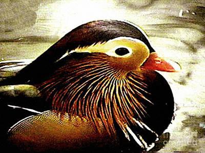 Photograph - Wood Duck by Merton Allen