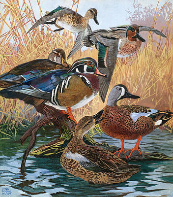 Painting - Wood Ducks by Lynn Bogue Hunt