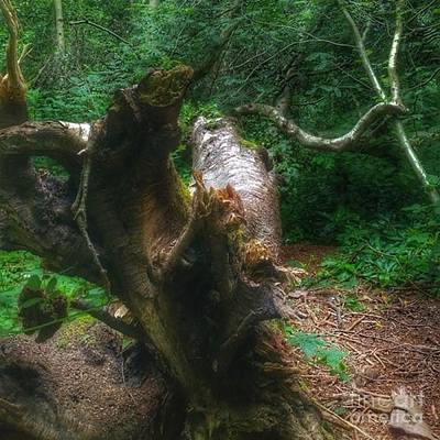 Forest Photograph - #wood #tree #forest #nature by YoursByShores Isabella Shores