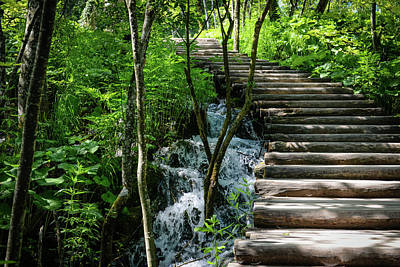 Photograph - Wooden Hiking Path Or Trail In A Forest by Brandon Bourdages