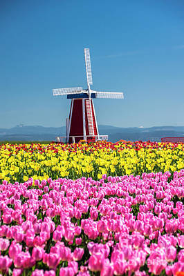 Photograph - Wooden Shoe Tulip Windmill by Louise Magno