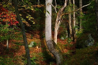 Photograph - Woodland Leaf Color by Kathryn Meyer