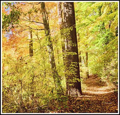Photograph - Woodland Path, Autumn, Southeastern Pennsylvania by A Gurmankin