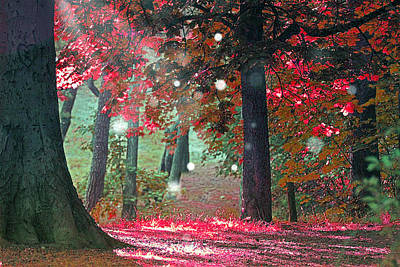 Trees In The Forest Photograph - Woods  by Mark Ashkenazi