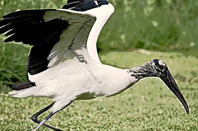 Photograph - Woodstork by Rose  Hill