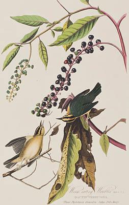 Warbler Wall Art - Painting - Worm Eating Warbler  by John James Audubon