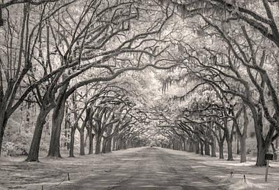 Savannah Infrared Photograph - Wormsloe Ir 1077 by Bob Neiman