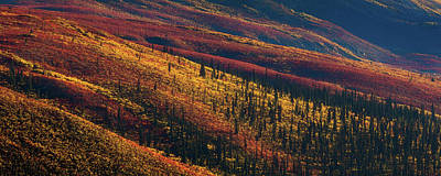 Fall Photograph - Woven by Chris Moore