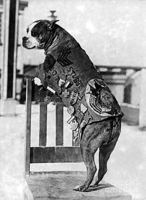 Yankee Division Photograph - Wwi, Sergeant Stubby, American War Dog by Science Source