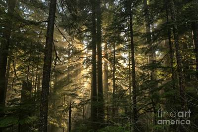 Photograph - Sol Duc Light Beams by Adam Jewell