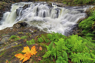 Yacolt Falls In Autumn Art Print by David Gn