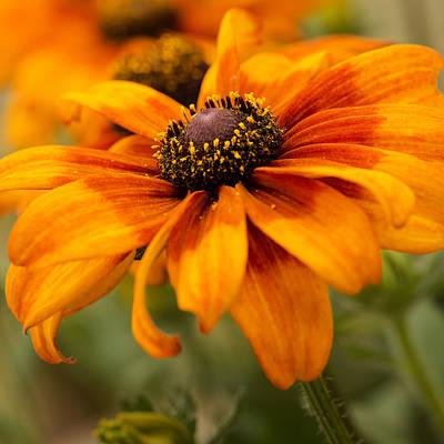 Yellow And Orange Petals Art Print