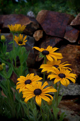Photograph - Yellow Beauty by Cherie Duran