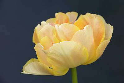 Photograph - Yellow Beauty by Inge Riis McDonald
