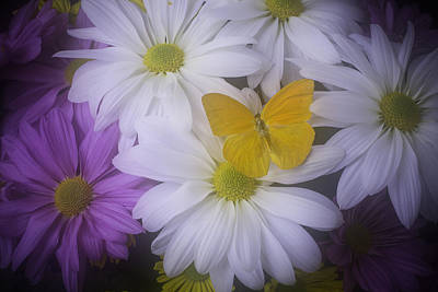 Yellow Butterfly Resting Art Print by Garry Gay