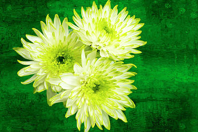 Yellow Chrysanthemums On A Green Background. Art Print by Paul Cullen