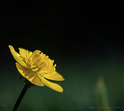 Photograph - Yellow Flower by Henri Irizarri