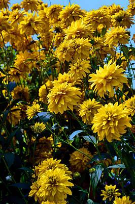 Passiflora Digital Art - Yellow Flowers. by Andy Za