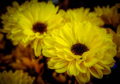 Photograph - Yellow Flowers by Lilia D