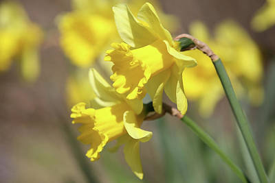 Photograph - Yellow by Mark Severn