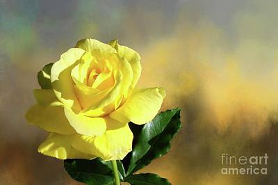 Photograph - Yellow Rose Of Texas by Janette Boyd