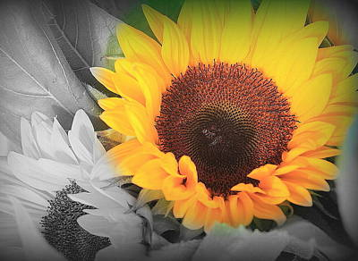 Photograph - Yellow Sunflower On Black And White by Dora Sofia Caputo Photographic Design and Fine Art